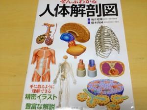 人体解剖2