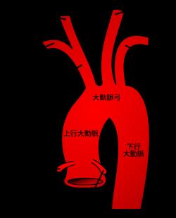daidoumyaku