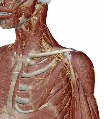 肩の3D考察