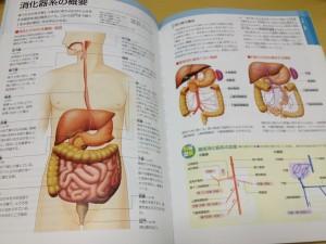 人体解剖1