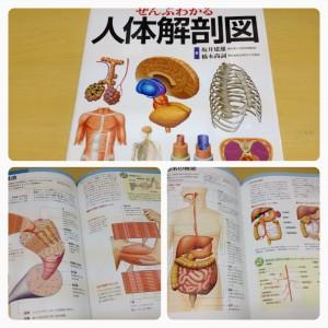 ぜんぶわかる人体解剖図集