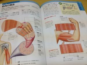 人体解剖3