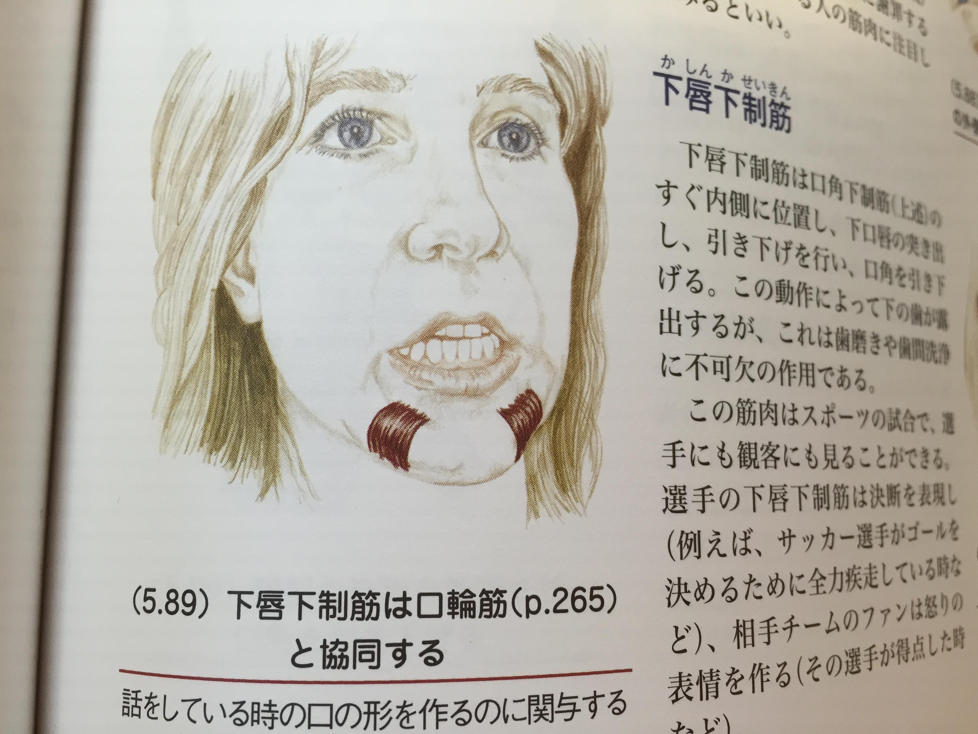 「下唇下制筋」の画像検索結果