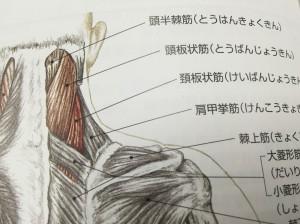 kenkouokyokin_14_1220