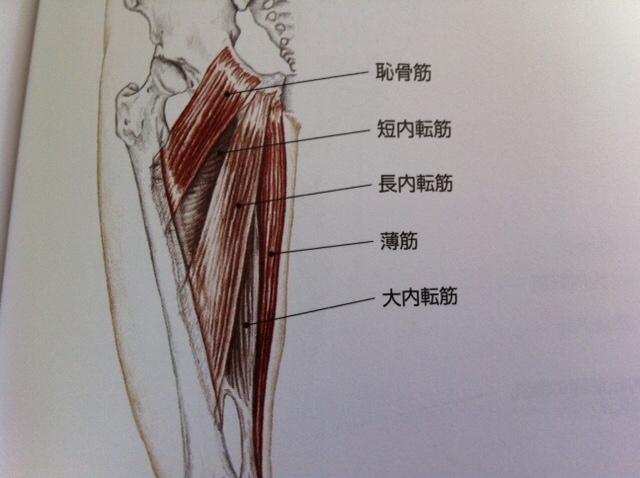 大腿骨(だいたいこつ)・人体で一番長い ...