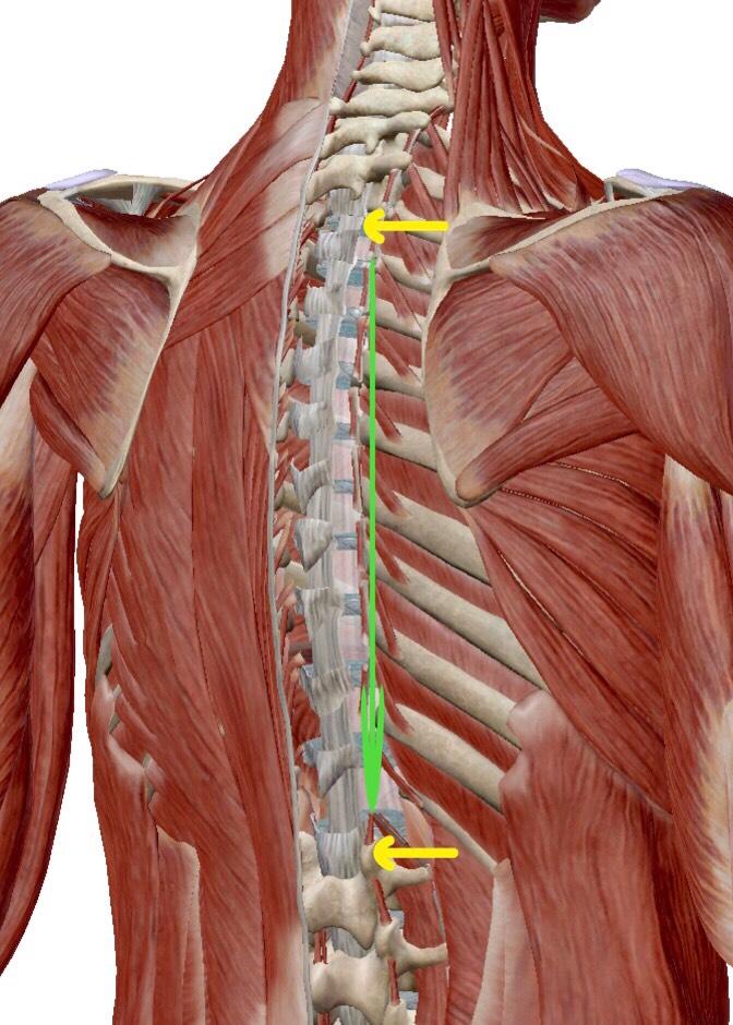 白い紐~「脊髄」