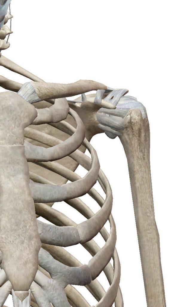 肩関節のメカニズム1