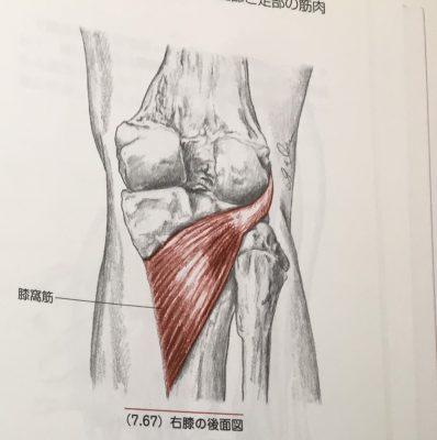 「膝窩筋の機能解剖」理学療法士 飯島弘貴先生のコラム