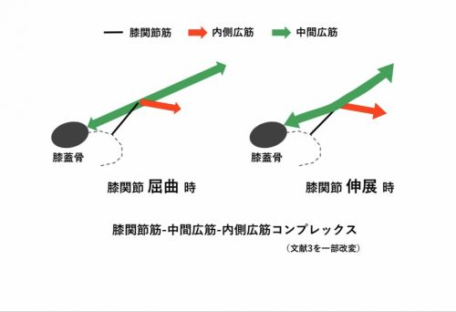「膝関節筋の謎」理学療法士 飯島弘貴先生のコラム