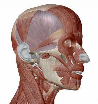 「顎関節と解剖」理学療法士 田代雄斗先生のコラム