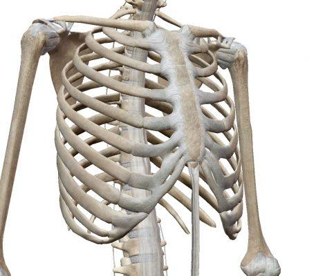 「肋骨骨折と解剖」理学療法士 田代雄斗 先生のコラム