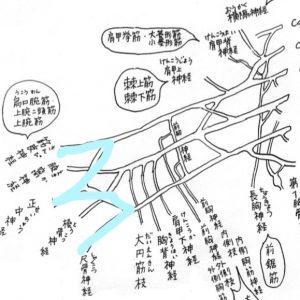 「神経と解剖」理学療法士 田代雄斗 先生のコラム