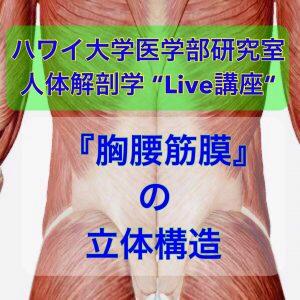 2021年11月21日(日)【胸腰筋膜】ハワイ大学講師による無料オンラインセミナー_大澤先生グループ