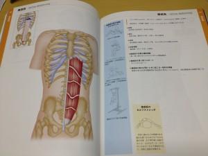 骨格筋ハンド 2